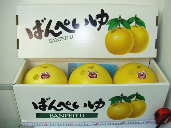 熊本八代特産 ばんぺいゆ3玉化粧箱入Lサイズ(約1.7kg×3玉入)バンペイユ|晩白柚【お歳暮】