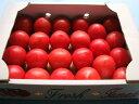 熊本八代産 塩トマト(フルーツトマト)1箱満杯詰め(約1.5kg 15〜30玉前後)塩とまと