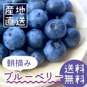 Blueberry_tn