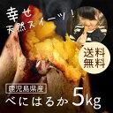 鹿児島県産 べにはるか5kg 【送料無料】さつまいも 自然貯蔵で追熟済の紅はるか まるでスイーツ 焼き芋やお菓子作りにもってこい!