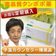 【定期購入】ショウキT-1プラス 30袋【クーポンは利用できません】●タンポポ茶/たんぽぽ茶