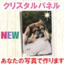 クリスタルパネル KR1510 ペット 犬 猫 写真たて デジカメプリント デジカメアクセサリー 壁掛け フォトフレーム メモリアル パネル 写真加工