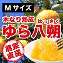 「由良町」檜屋 紀州天狗(さしみ醤油)700ml 醤油 しょうゆ  ギフト