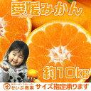 【バラ詰】愛媛みかん 約10kg【愛媛県産】【送料無料】