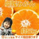 【バラ詰】愛媛みかん 約5kg【愛媛県産】【送料無料】