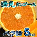 【バラ詰】愛媛県産 清見タンゴール 約5kg【送料無料】【みかん/ミカン/蜜柑】