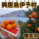 【贈答用】興居島伊予柑 約10kg いよかん 【送料無料】