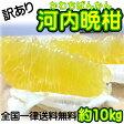 【訳あり】/愛媛県産 河内晩柑 約10kg/(美生柑・宇和ゴールド) 【送料無料】和製グレープフルーツ