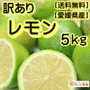 【訳あり】/国産 レモン 約5kg/愛媛県産(れもん)【ワックス・防腐剤不使用】