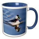 【3drose VWPics動物 オスBufflehead Duck Swimming with R