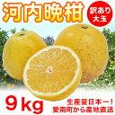 【送料無料】河内晩柑 訳あり大玉9kg 3L以上【愛媛県愛南町産】柑橘専門店
