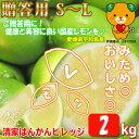 【きれいなレモン】2kg S/M/Lサイズ別 みため○おいしさ◎ 贈答用/秀品【送料無料】(グリーンレモン/レモン/国産レモン)
