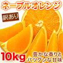 【送料無料】訳ありネーブルオレンジ 10kg 愛媛...