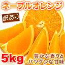 【送料無料】訳ありネーブルオレンジ 5kg 愛媛県産【希少な国産ネーブル】