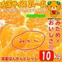 【愛媛みかん】大玉2L〜3L 10kg みため×おいしさ◎訳...