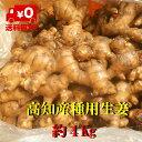 【送料無料】高知産囲い生姜 種用  約4Kg ただし北海道沖縄は送料800円(100サイズまで)のご負担お願いします。