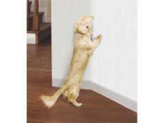 明和グラビア犬猫ツメ傷保護シート吸着タイプベージュ46×90cm[爪とぎ猫爪とぎ防止シート爪とぎシー