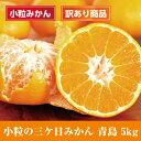 訳あり【タイベック栽培】送料無料 小粒の三ケ日みかん(青島)5kg