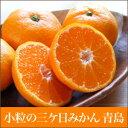 訳あり 【送料込】小粒の三ケ日みかん(青島)5kg