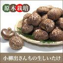 生しいたけ 【伊豆】小柳出さんちの原木栽培「生しいたけ」Mサイズ1kg
