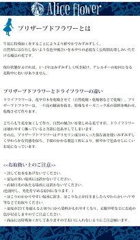 【送料無料】プリザーブドフラワーリースグリーンリースドライリースアレンジクリスマス完成品Mサイズ