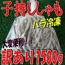 ◆訳あり◆子持ちシシャモ◆1500g【05P28Sep16】【05P01Oct16】