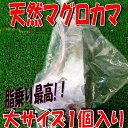 ◆大サイズ1個◆マグロカマ肉脂たっぷり【05P03Dec16】