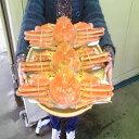◆送料無料◆ボイルズワイガニ姿特大約650g×3尾セット【0...