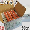 【送料無料】仙寿卵60個入(破損保証6個を含む)