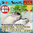 冷凍 剥き牡蠣 Lサイズ たっぷり1kg(NET800g)/かき/カキ/カキフライ/かき鍋