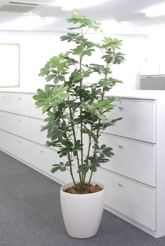 【直送】【送料無料】光の楽園 カポック1.8m 158A300 本物のような精巧な作りで人気の光触媒加工の人工観葉植物。オフィスやストア、開店・開業のお祝い、ギフト・ご贈答ギフトに!!