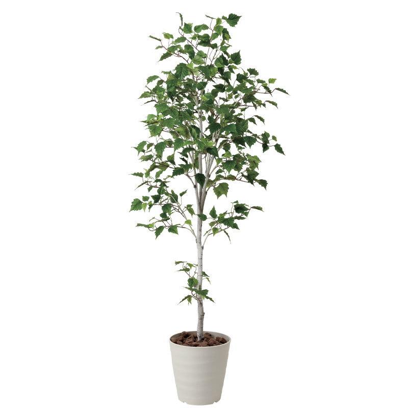 【直送】【送料無料】光の楽園 白樺シングル1.8m 421A300 本物のような精巧な作りで人気の光触媒加工の人工観葉植物。オフィスやストア、開店・開業のお祝い、ギフト・ご贈答ギフトに!!