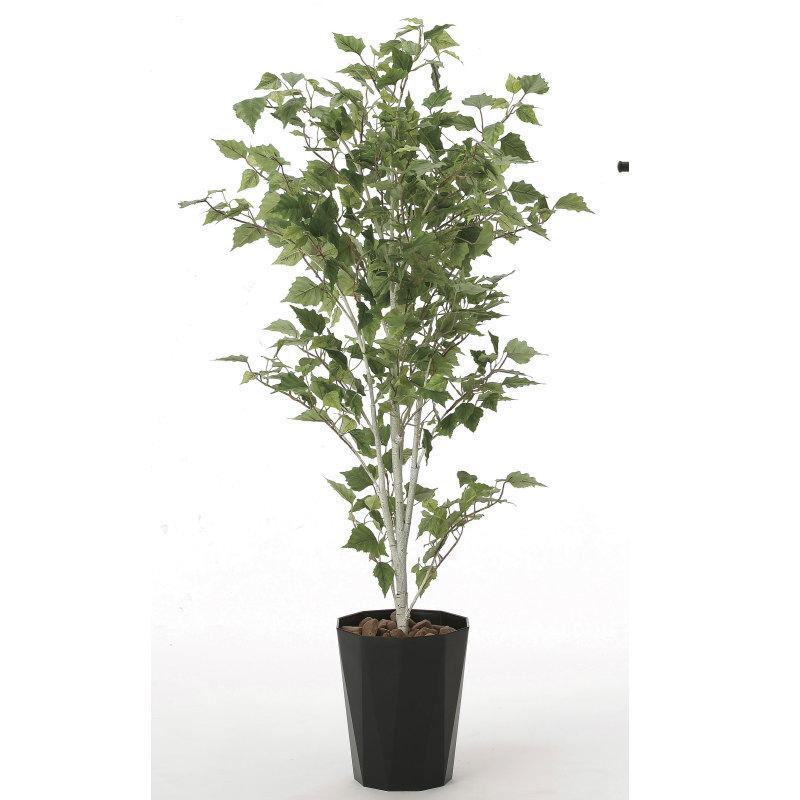 【直送】【送料無料】光の楽園 白樺1.4m 607A270 本物のような精巧な作りで人気の光触媒加工の人工観葉植物。オフィスやストア、開店・開業のお祝い、ギフト・ご贈答ギフトに!!