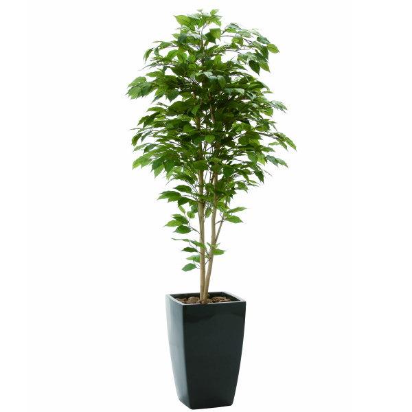 【直送】【送料無料】光の楽園 アーバンベンジャミン1.8 715a550 本物のような精巧な作りで人気の光触媒加工の人工観葉植物。オフィスやストア、開店・開業のお祝い、ギフト・ご贈答ギフトに!!