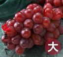 紫苑(しえん)特大サイズ約1kg×1房【お歳暮ギフト】10P03Dec16