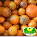 特別栽培[超わけあり]有田みかん10kg    【減農薬栽培・有機肥料100%】【超訳あり】【ロットA】
