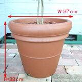 植木や実のなる木を鉢植えしてお届けいたします。【オプション】 素焼鉢 鉢植え(Lサイズ)
