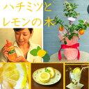 国産はちみつ&レモンの木ギフト