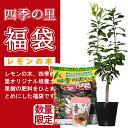 【新春福袋】レモンの木・HAPPY BAG3点セット