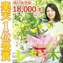 【幸せレモンの木】レモンの木 果樹苗 庭木 鉢苗 植木 苗木 苗 シンボルツリー 常緑 常緑樹 実の