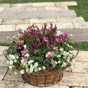 優しい色合いで可愛い花かご風寄せ植え