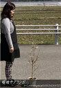 【実のなる木】サクランボ/さくらんぼ