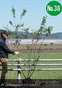 """ジューンベリー/ジュンベリー""""ラマルキー""""(樹高:2.0〜2.2m内外)2019.5月撮影"""
