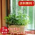 [ギフト●ご自宅用に]キッチンハーブ5種香りの寄せ植え