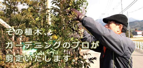 剪定 ガーデニングのプロによる剪定サービス発送前の商品に限りますご希望の植木と一緒にご注文ください