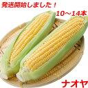 【ポイント2倍】発送開始 とうもろこし ゴールドラッシュ 1...