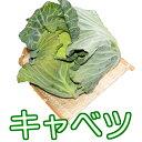 蔬菜, 蘑菇 - 島原半島産 キャベツ
