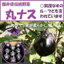 福井伝統野菜丸なす7~9個入り箱【送料無料】