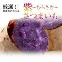 *福井県あわら産*《紫さつまいも!約5Kg箱》{送料無料}マッタリとした甘さが自慢です。