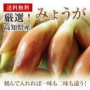 高知県産みょうがたっぷり!約1kg入り今なら甘酢1袋も付いています!【送料無料】
